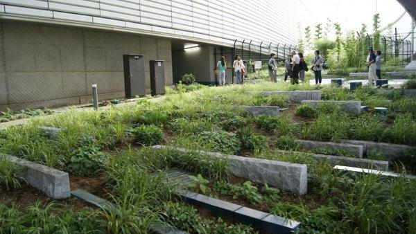 目黑天空庭園 (1).JPG
